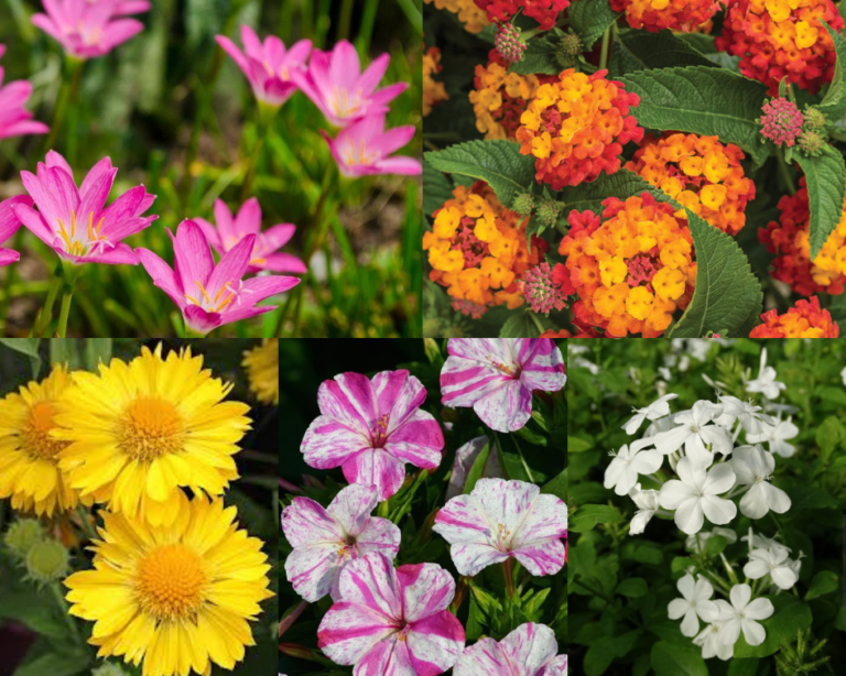 10 Low maintenance plants you can grow